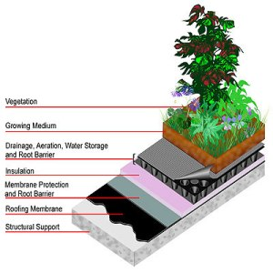 diagrama cubierta vegetal